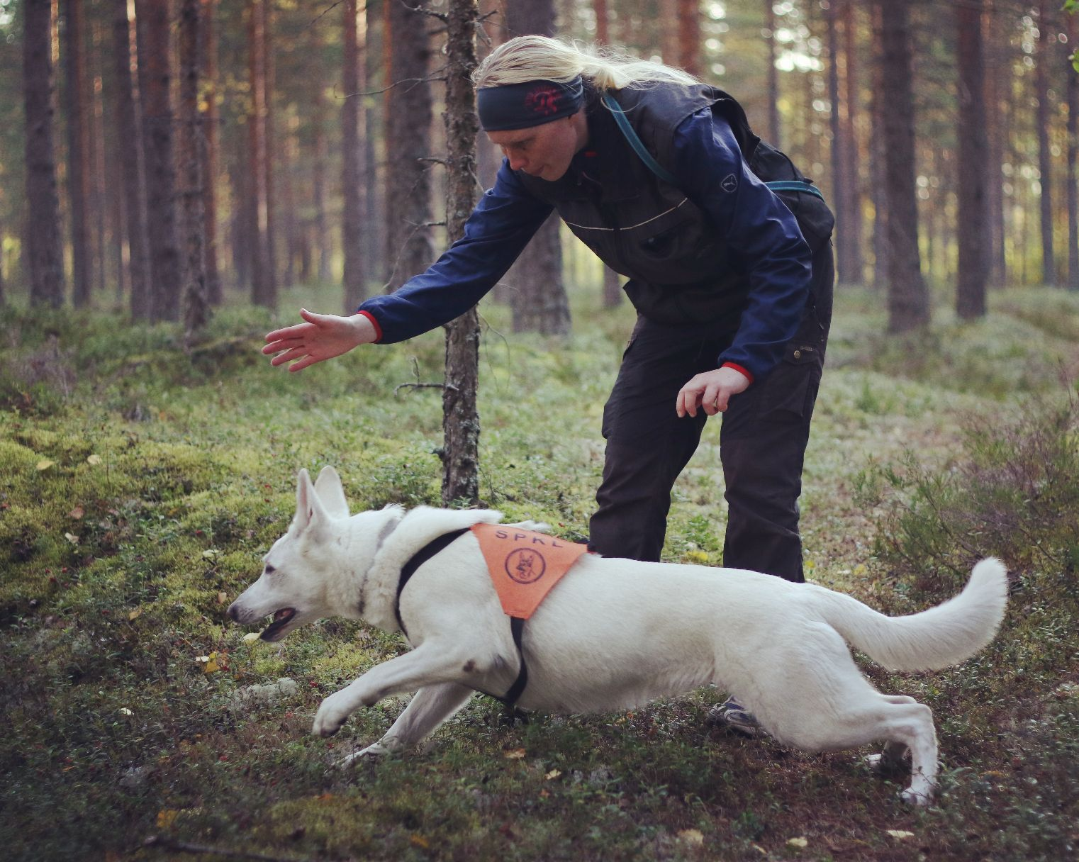 Born to Win White Oodi Search & Rescue Regional Championship Silver in Finland  1