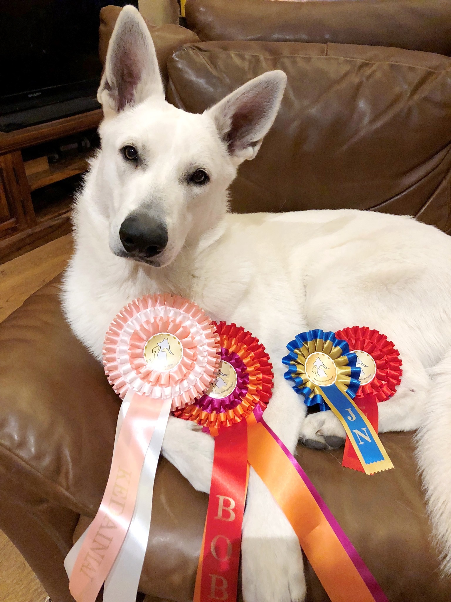 Born to Win White Prince Best of Group 4 & Lithuanian and Estonian Junior Champion 6