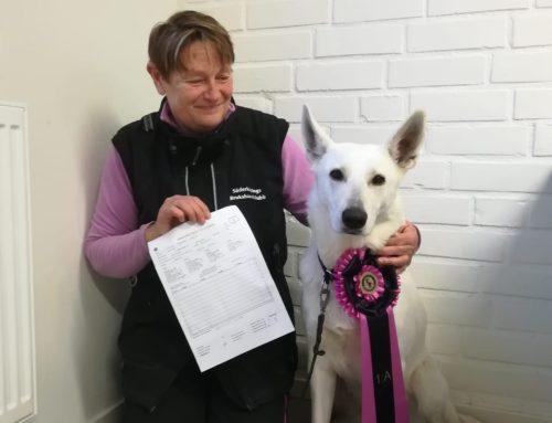 Born to Win Warrior Yara Won Rallye Obedience in Sweden