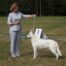 Born to Win White Prince FIN CAC and Best Male 2 in a Dog Show in Finland! 5