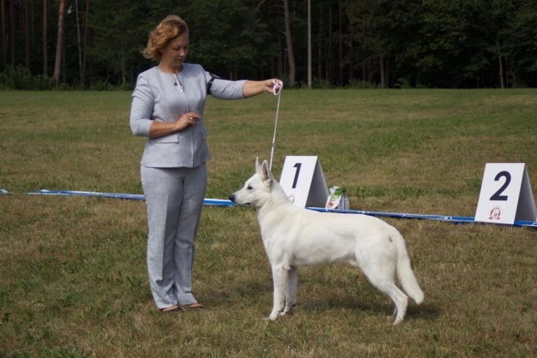 Born to Win Warrior Flavius EST CAC from Dog Show 1