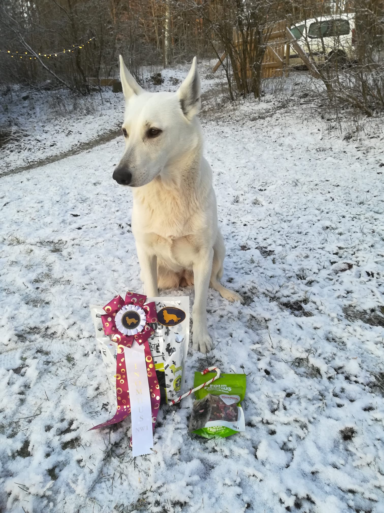 Born to Win Warrior Yara 1st Place in Search in Sweden 1