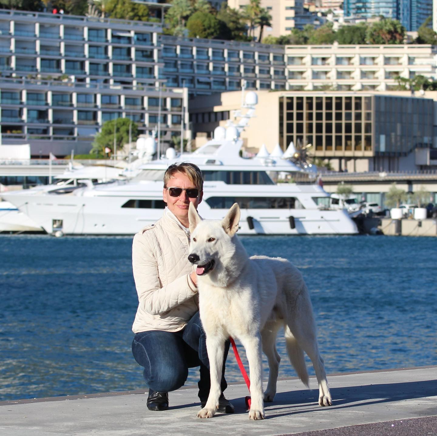 White Dog Monaco Monte-Carlo White Shepherd Born to Win White Escobar