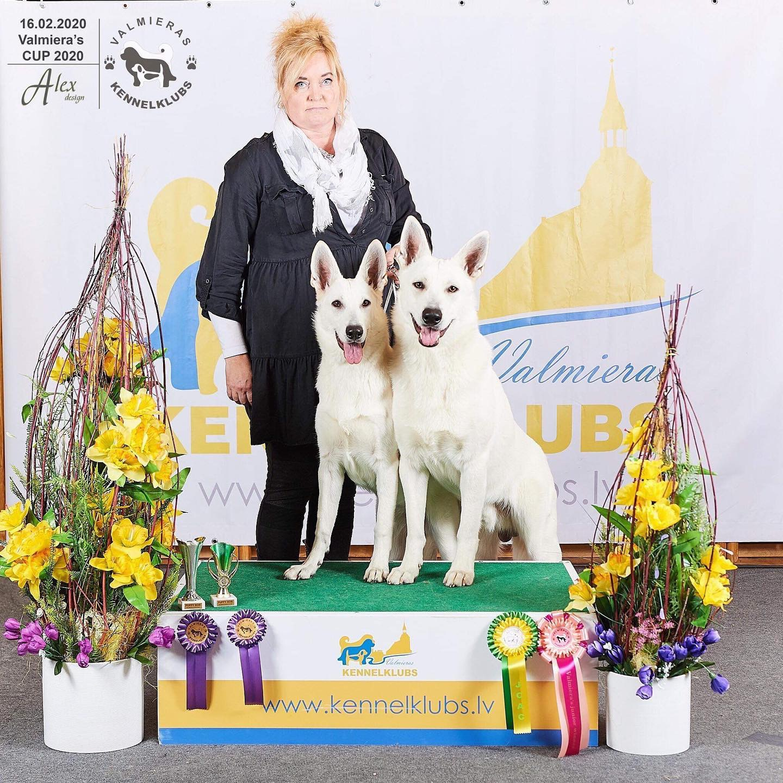 White Shepherd Puppies Dog Show