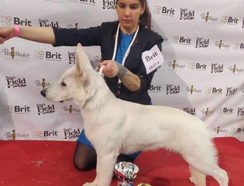 BTWW Renegade BIS Puppy 4