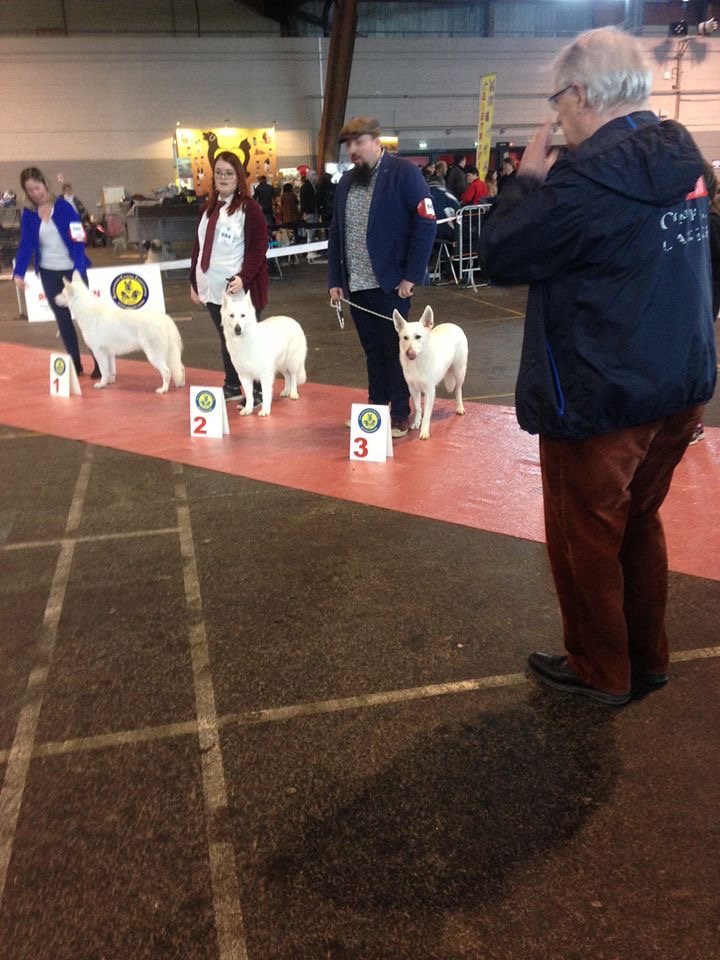 BTWW Damascus in Dog Show in France