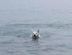 arizonaswimming