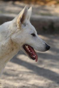 Berger-Blanc-Suisse-Born-to-Win-White-Oligarch-032010