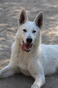 Berger-Blanc-Suisse-Born-to-Win-White-Oligarch-032011