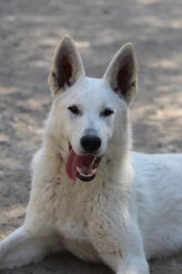 Berger-Blanc-Suisse-Born-to-Win-White-Oligarch-032013