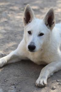 Berger-Blanc-Suisse-Born-to-Win-White-Oligarch-032015