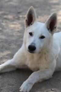 Berger-Blanc-Suisse-Born-to-Win-White-Oligarch-032016