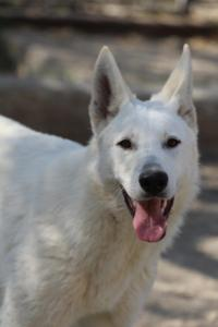 Berger-Blanc-Suisse-Born-to-Win-White-Oligarch-03208