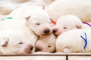 puppy133