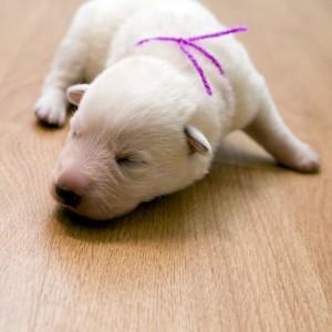 puppy15