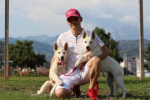 White-Swiss-Shepherd-Breeding-Male-BTWW-Wahlman-August-2018-0266