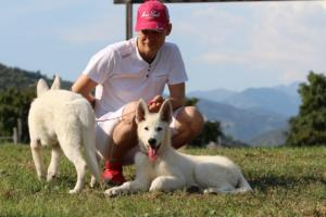 White-Swiss-Shepherd-Breeding-Male-BTWW-Wahlman-August-2018-0105