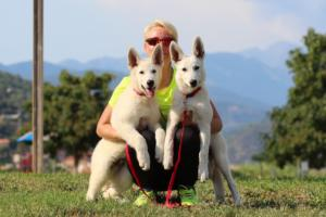 White-Swiss-Shepherd-Breeding-Male-BTWW-Wahlman-August-2018-0275