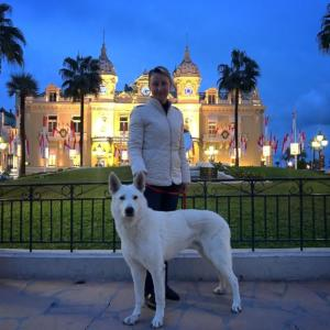White-Swiss-Shepherd-Male-Born-to-Win-White-Escobar-13