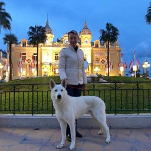 White-Swiss-Shepherd-Male-Born-to-Win-White-Escobar-14