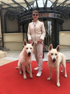 White-Swiss-Shepherd-Male-Born-to-Win-White-Escobar-22