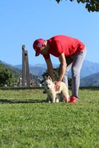 White-Swiss-Shepherd-Puppies-BTWW-F-August-2018-0035
