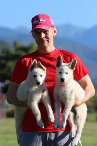 White-Swiss-Shepherd-Puppies-BTWW-F-August-2018-0043