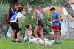 White-Swiss-Shepherd-Puppies-BTWW-GosaNostra-September-12092018-0002