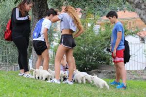 White-Swiss-Shepherd-Puppies-BTWW-GosaNostra-September-12092018-0003