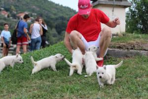 White-Swiss-Shepherd-Puppies-BTWW-GosaNostra-September-12092018-0021