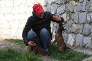 Belgian-Malinois-Puppies-BTWW-H-Litter-180319-0057