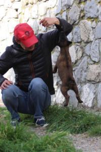 Belgian-Malinois-Puppies-BTWW-H-Litter-180319-0059