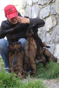 Belgian-Malinois-Puppies-BTWW-H-Litter-180319-0069