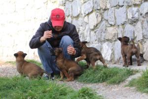 Belgian-Malinois-Puppies-BTWW-H-Litter-180319-0216