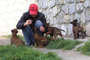 Belgian-Malinois-Puppies-BTWW-H-Litter-180319-0217