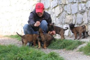 Belgian-Malinois-Puppies-BTWW-H-Litter-180319-0219