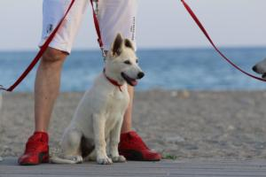 White-Swiss-Shepherd-Puppies-BTWW-N-Litter-05062019-0023