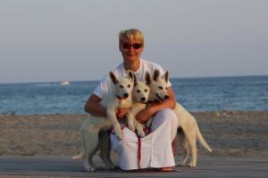 White-Swiss-Shepherd-Puppies-BTWW-N-Litter-05062019-0032