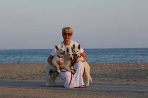 White-Swiss-Shepherd-Puppies-BTWW-N-Litter-05062019-0042