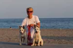 White-Swiss-Shepherd-Puppies-BTWW-N-Litter-05062019-0054