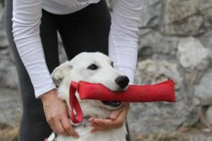 White-Shepherd-Puppies-BTWW-Spartans-046