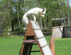 jumpinga