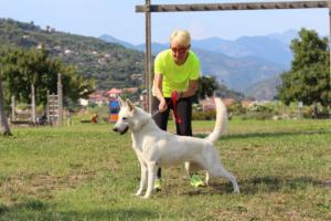 White-Swiss-Shepherd-Breeding-Male-BTWW-Wahlman-August-2018-0001