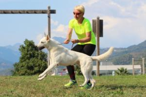 White-Swiss-Shepherd-Breeding-Male-BTWW-Wahlman-August-2018-0005