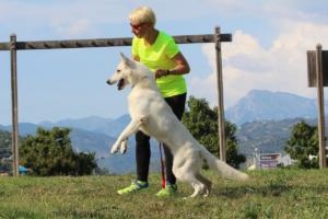 White-Swiss-Shepherd-Breeding-Male-BTWW-Wahlman-August-2018-0020
